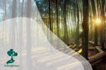 Serba Serbi Hutan Pinus: Ekosistem hingga Fakta Unik