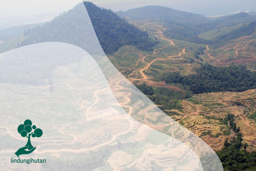 Mengintip Wajah Hutan Indonesia di Masa Depan