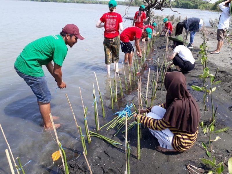 LindungiHutan dan IIWC Lestarikan Mangrove di Mangkang