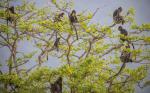 Taman Nasional Baluran: Flora Faunanya yang Memikat Hati