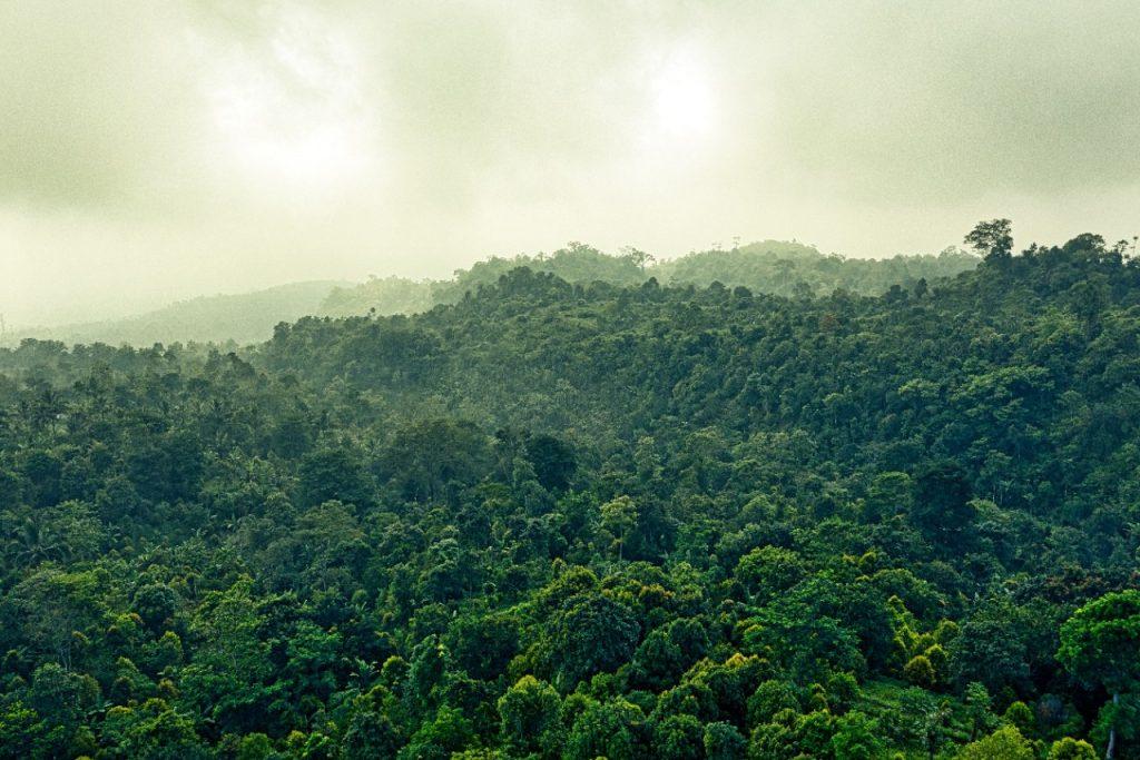 Hutan yang dapat Mengurangi Pemanasan Global