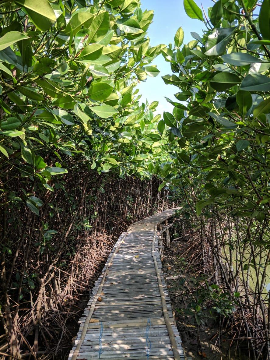 Ekosistem Mangrove untuk Keberlangsungan Makhluk Hidup