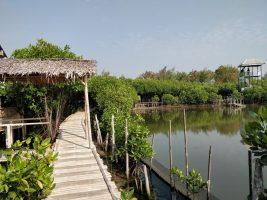 Wisata Sekaligus Belajar Mangrove? Ke Maroon MEP Yuk