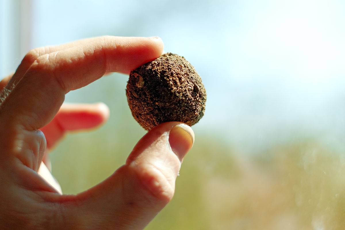 Rehabilitasi Hutan Dengan Seedball, Si Bola Benih Mungil