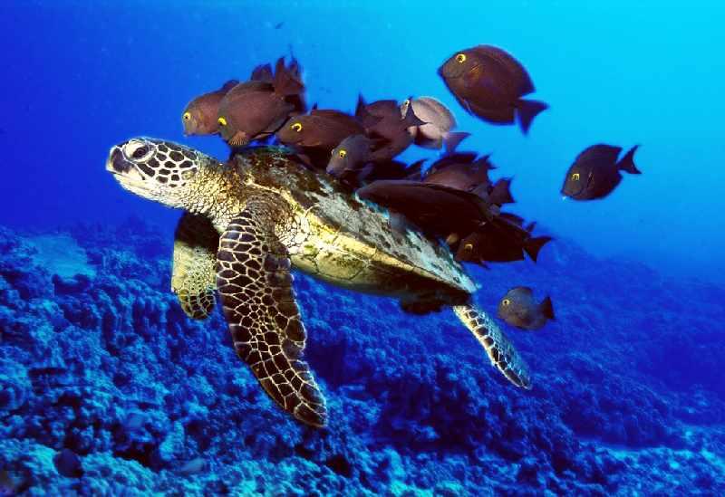 Ekosistem Laut yang Rusak Akibat Kerusakan Lingkungan