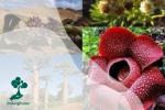Tumbuhan Langka di Dunia, Perlu Dilestarikan