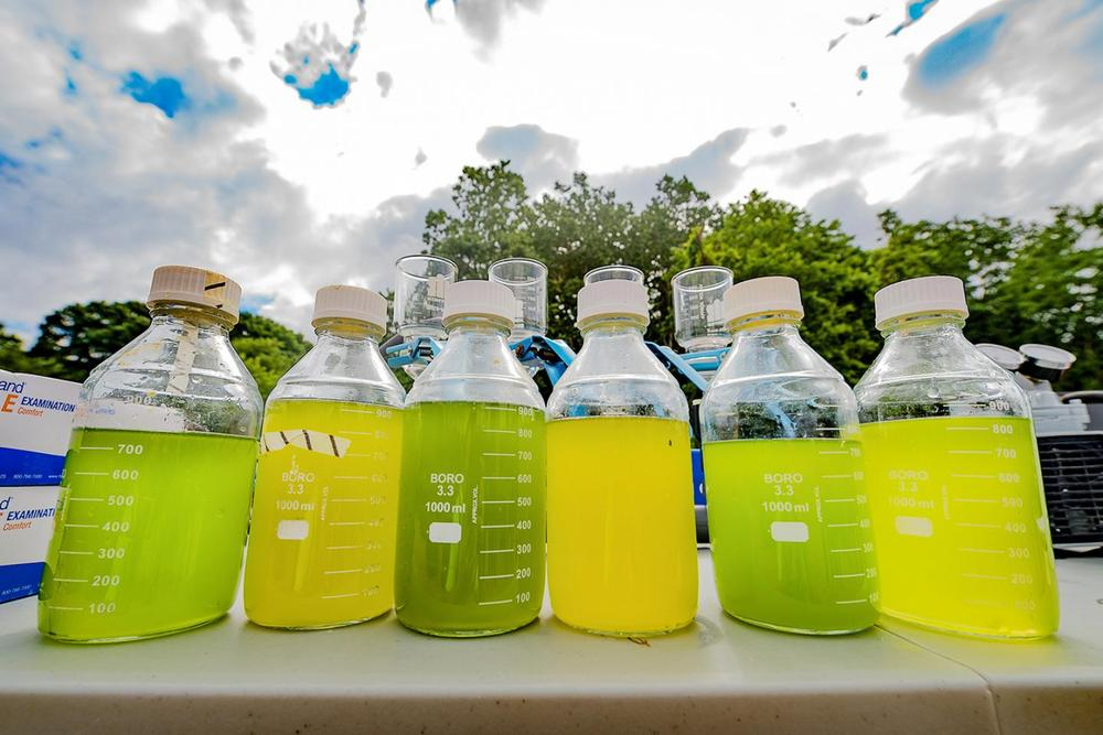 Energi Terbarukan Indonesia, Biofuel