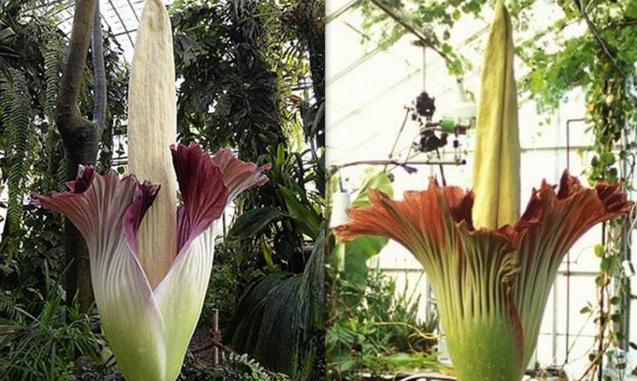Tumbuhan Langka Di Dunia Perlu Dilestarikan Wanaswara