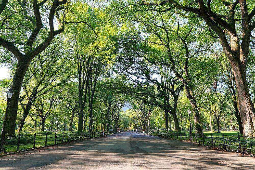 Hutan Kota, Sarana Pelepas Stres Masyarakat Kota