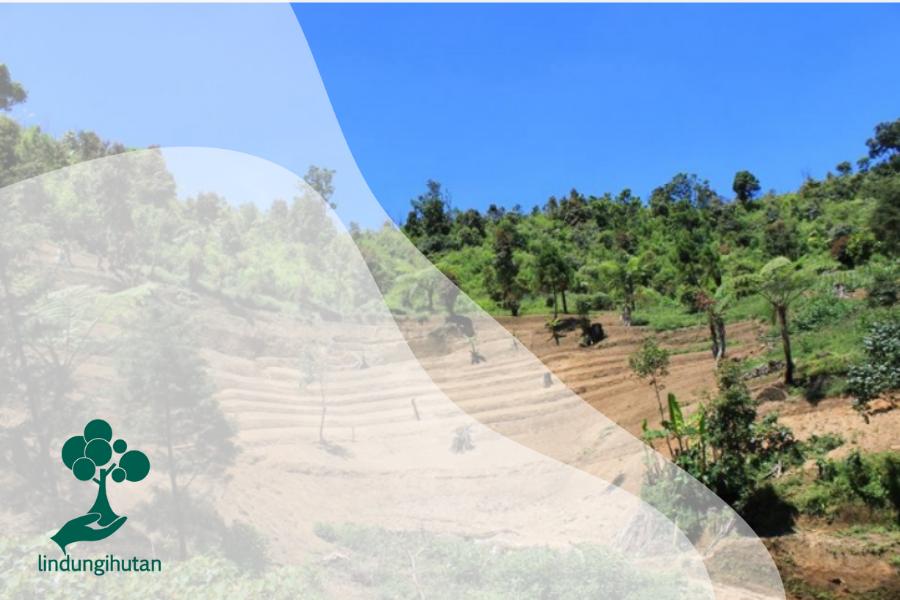 9 Dampak Kerusakan Hutan Bagi Lingkungan Hidup