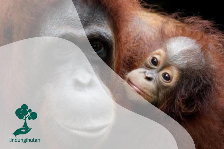 5 Hewan Endemik Lucu yang Terancam Punah