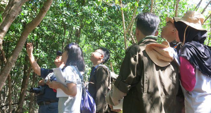 Pentingnya Pemantauan Mangrove