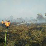 Musim Kemarau, Waspadai Kebakaran Hutan