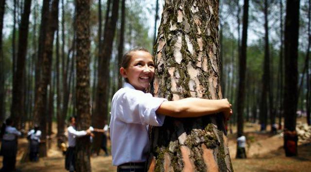 Berpelukan dengan Pohon Dapat Meningkatkan Kesehatan