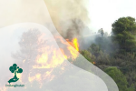 Penyebab kebakaran Hutan: Dunia sedang Darurat Api