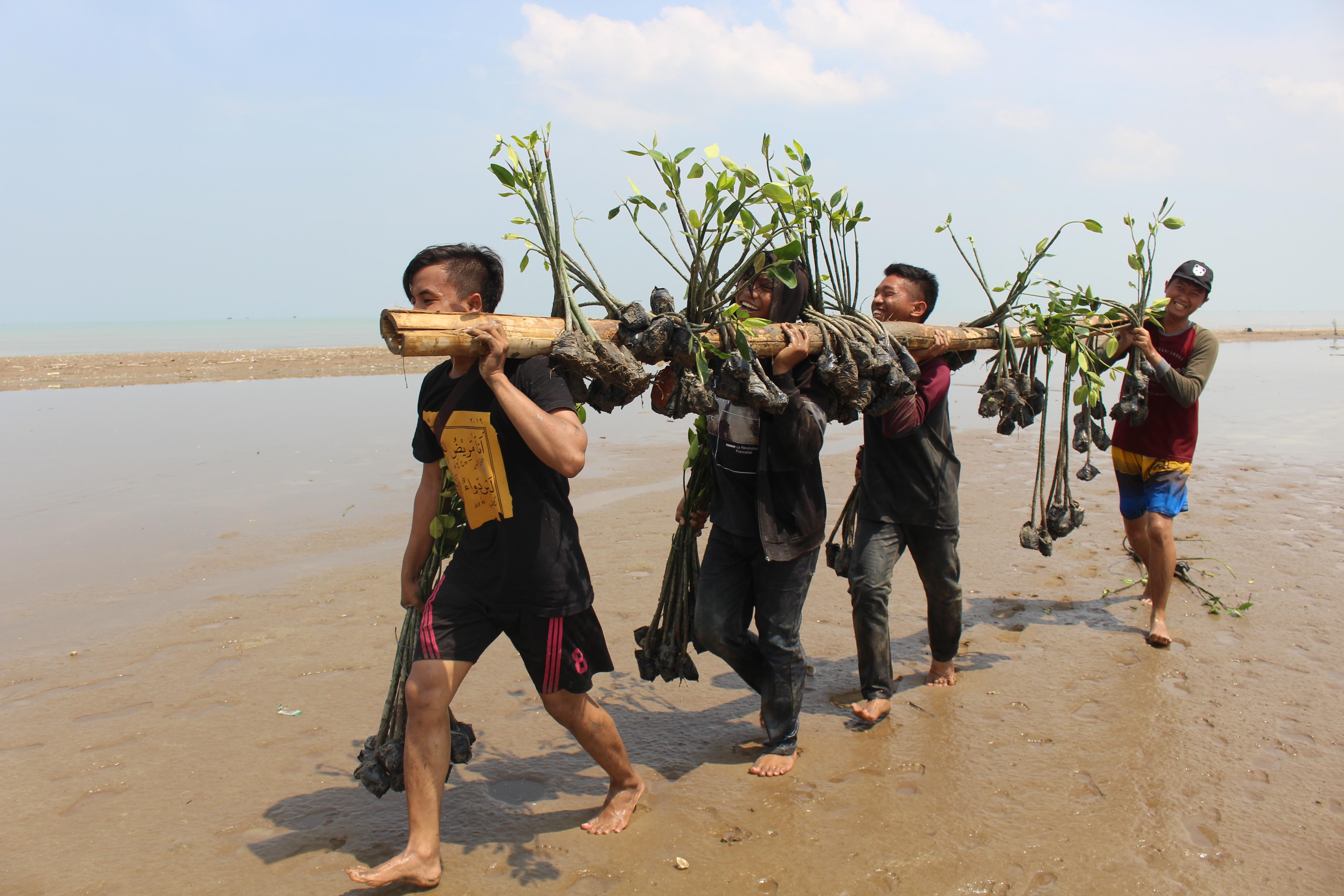 pengangkutan bibit mangrove menuju lokasi penanaman