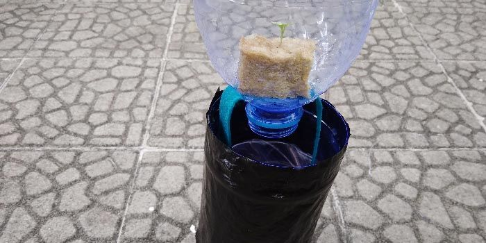 Tanaman hidroponik dengan menggunakan sistem wick pada botol bekas