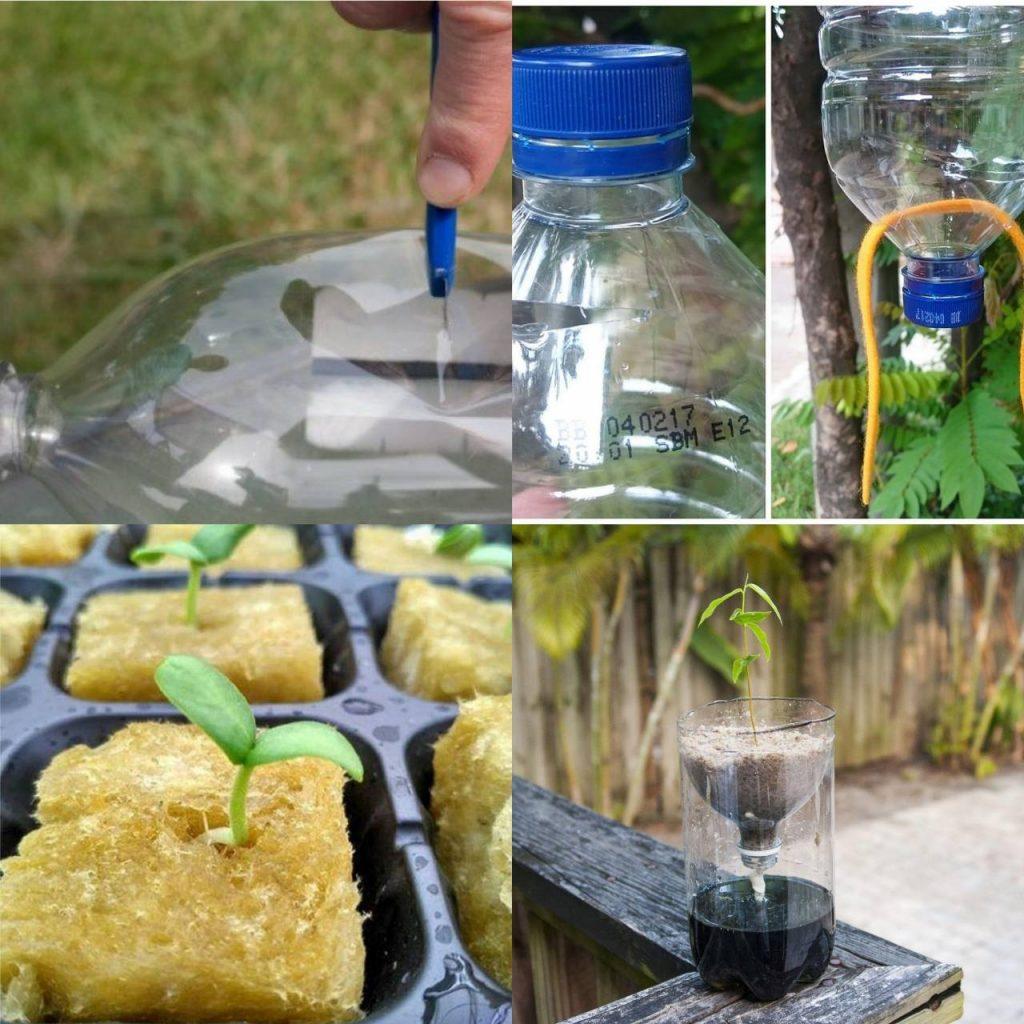 Langkah-langkah menanam hidroponik
