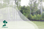 Hutan Mangrove : Harapan Baru Mitigasi Perubahan Iklim