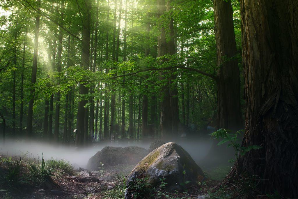Dukung Adaptasi Hutan