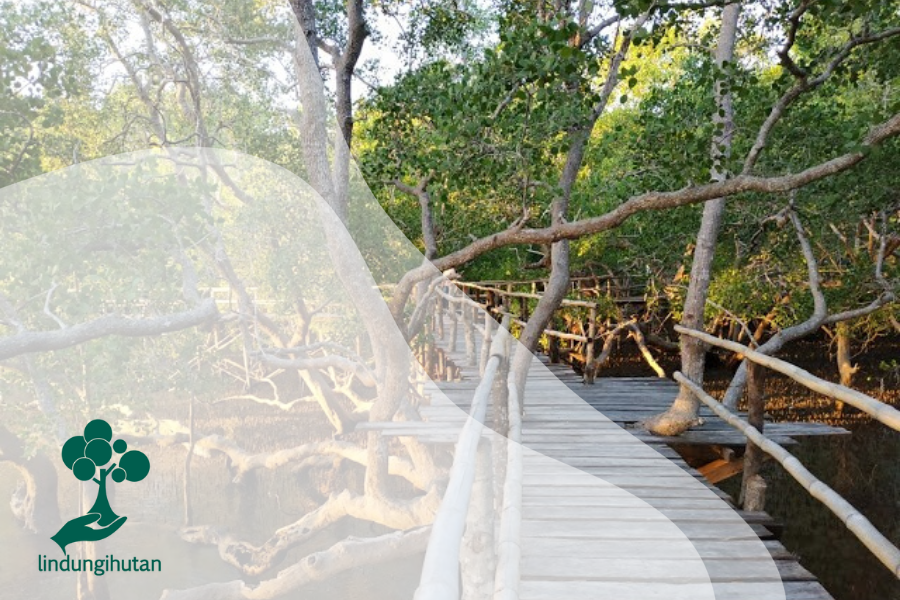 Menghayati Peranan Mangrove Tuk Cegah Perubahan Iklim