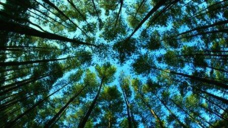 Hutan dengan segala fungsi yang dimilikinya