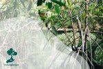 Faktor Keberhasilan Restorasi Mangrove