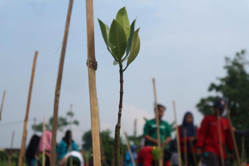 Mangrove untuk Kelangsungan Hidup Masyarakat
