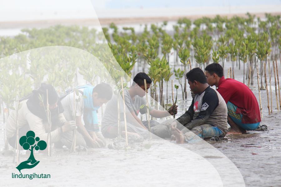 Mangrove untuk Ekosistem Alam dan Masyarakat