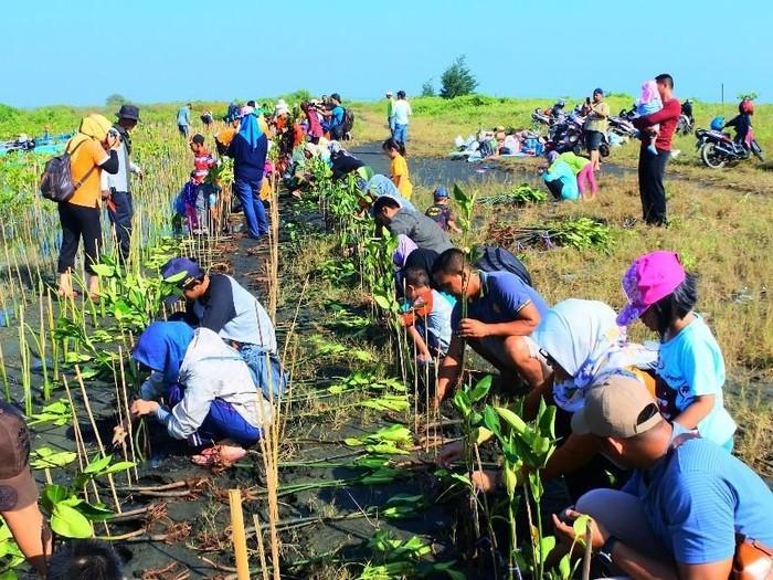 Menanam Mangrove Membantu Iklim Dunia Membaik