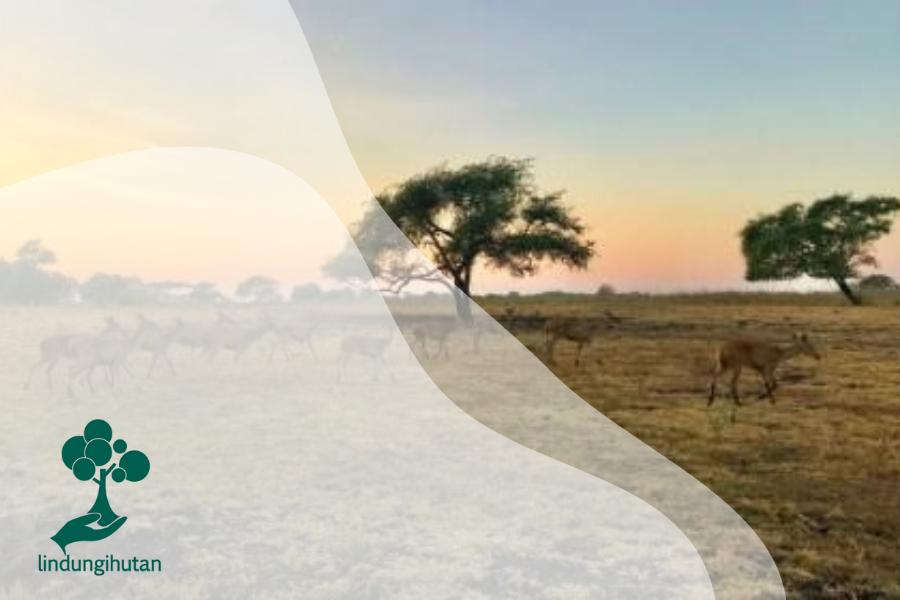 Fungsi Hutan Dalam Menjaga Perubahan Iklim Dibantu Mitos