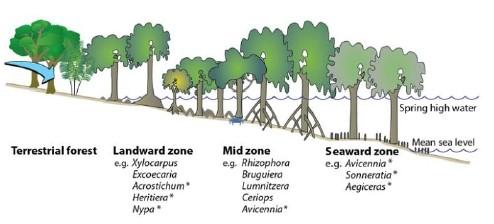Zonasi Hutan Mangrove