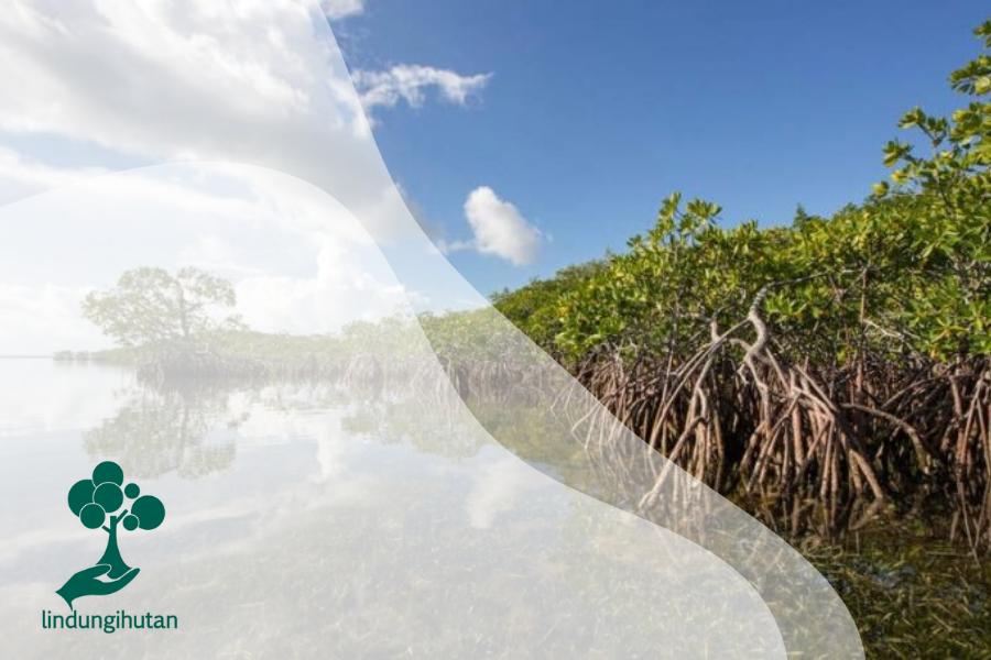 Emisi Karbon Bikin Emosi! : Yuk Kenalan Sama Blue Carbon