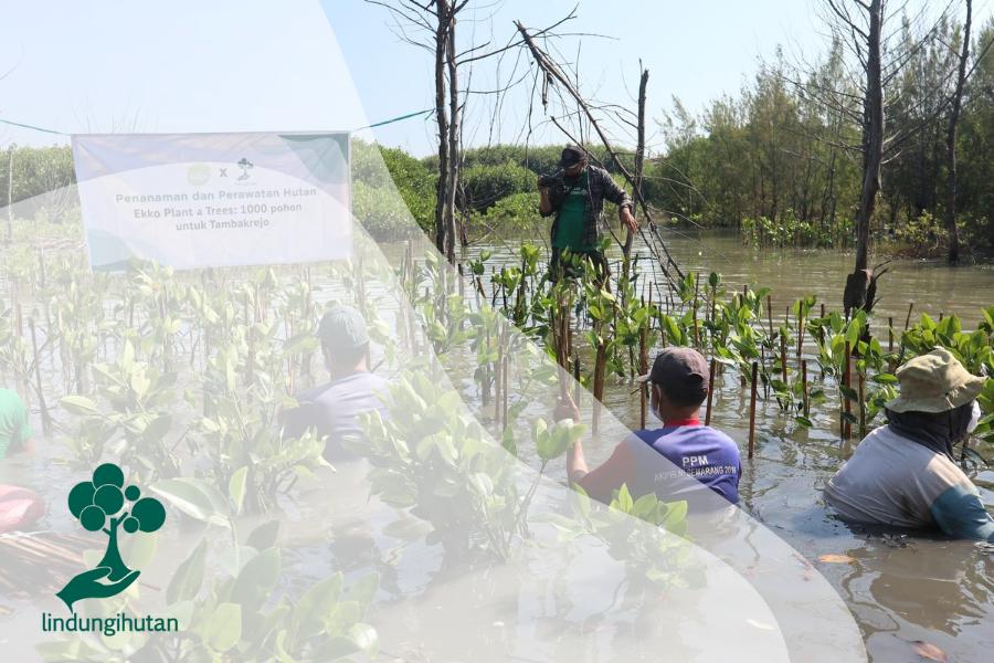 Ekko Plant a Tree: 1.000 Pohon untuk Tambakrejo