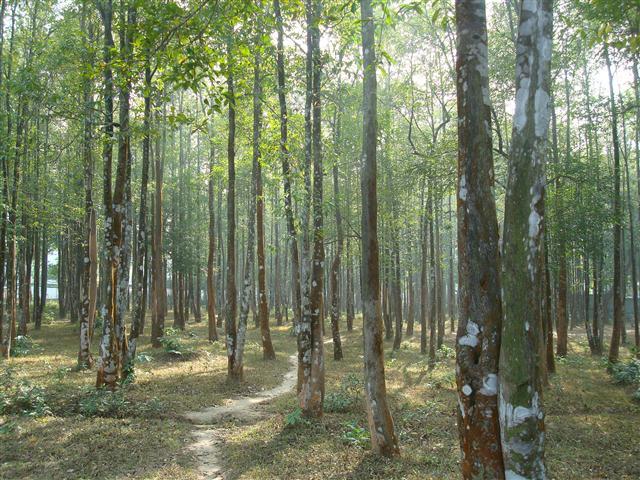 Hutan Gaharu