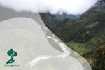 HKAN 2020, Apa Kabar dengan Hutan Papua?