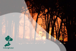 Mengapa Kebakaran Hutan Kerap Terjadi di Indonesia?
