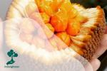 Keledang: Flora Langka Kaya Manfaat dari Hutan Kalimantan