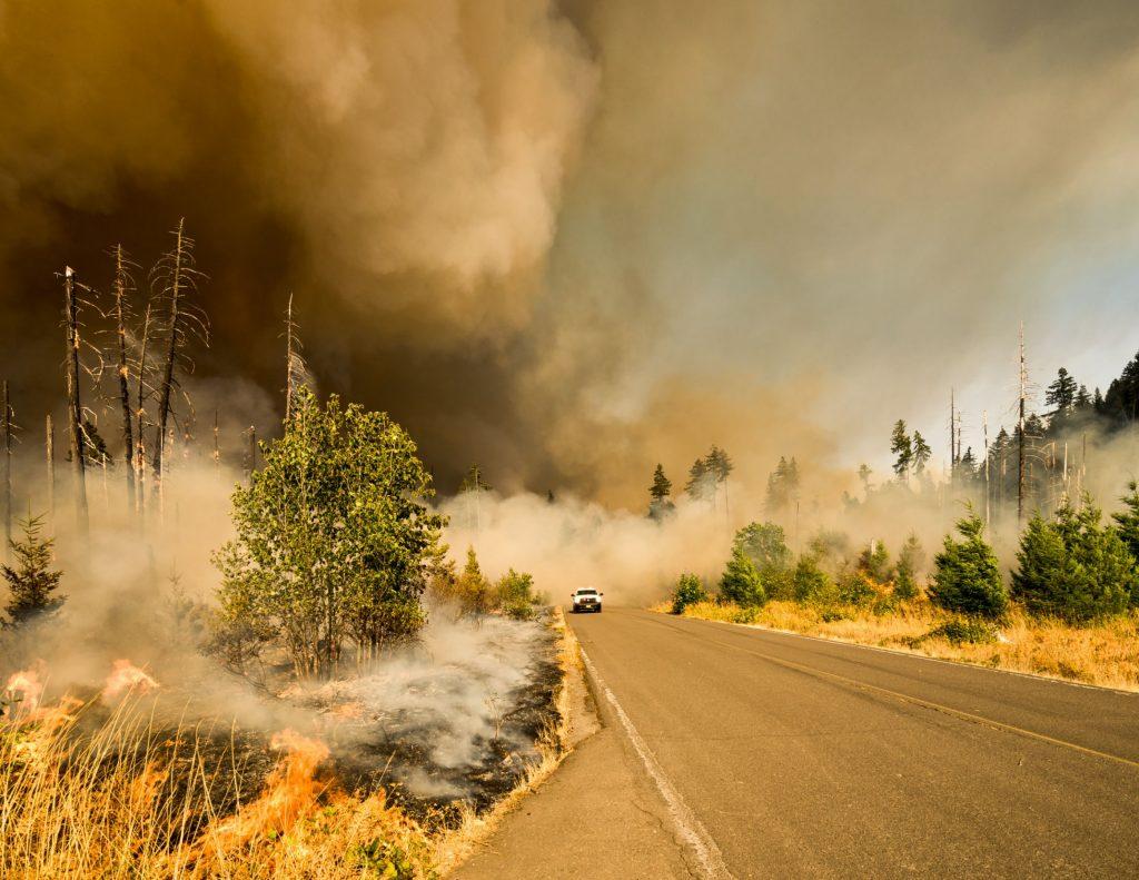 Krisis Dunia Akibat Hutan Menghilang