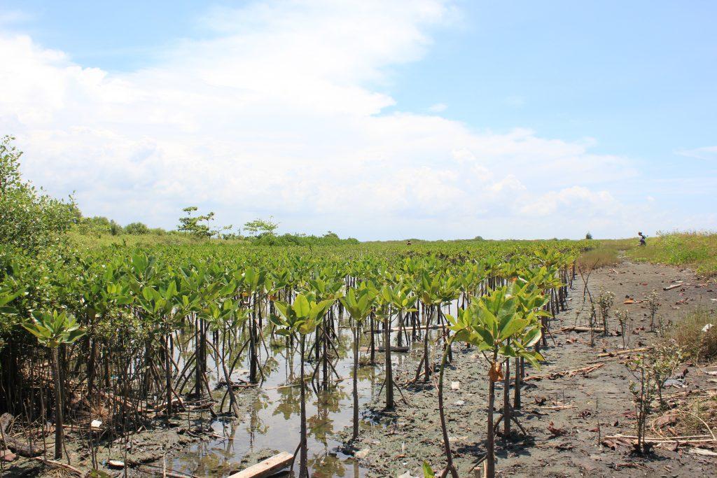 Pohon Mangrove