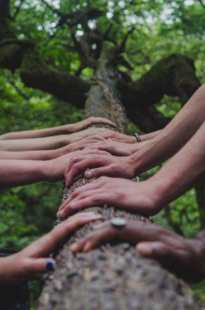 Mengapa Hutan Perlu Dijaga Kelestariannya