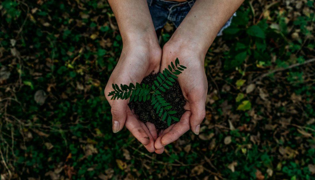 Reboisasi Untuk Melestarikan Hutan