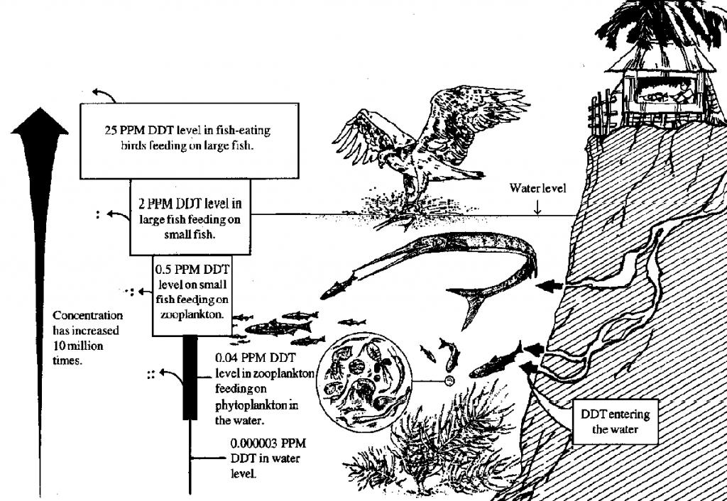 Siklus Pencemaran DDT