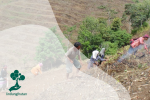 Solusi Vegetatif Upaya Cegah Bencana Longsor