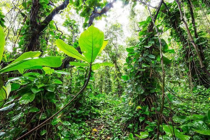 Gambar Hutan Asri
