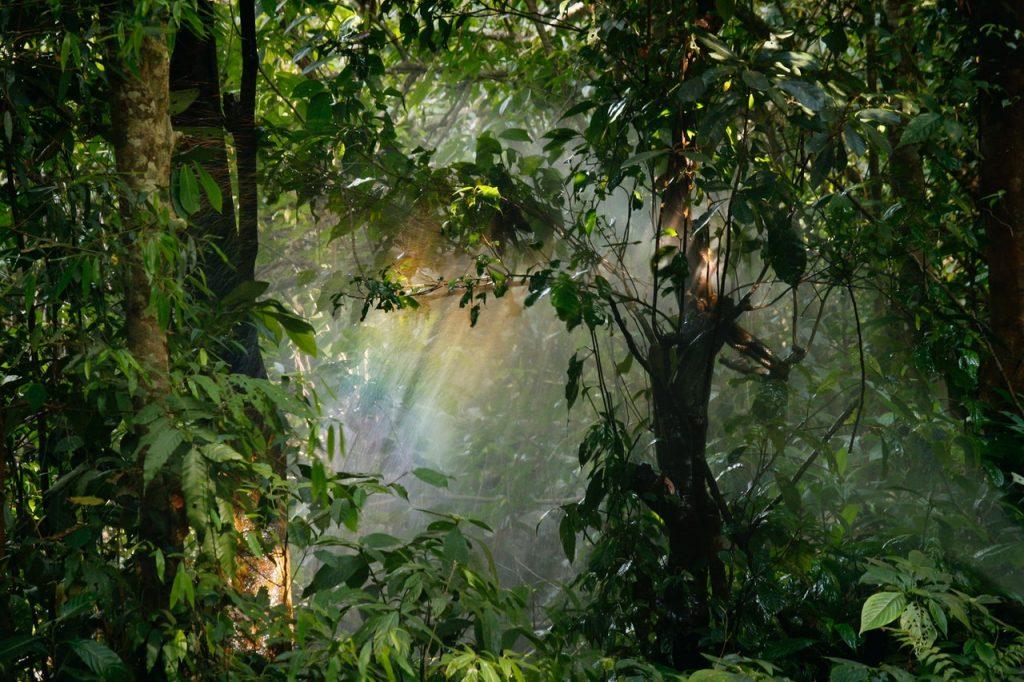 Hutan Hujan