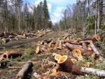 Hutan Indonesia di Masa Depan, Bagaimana Wujudnya?