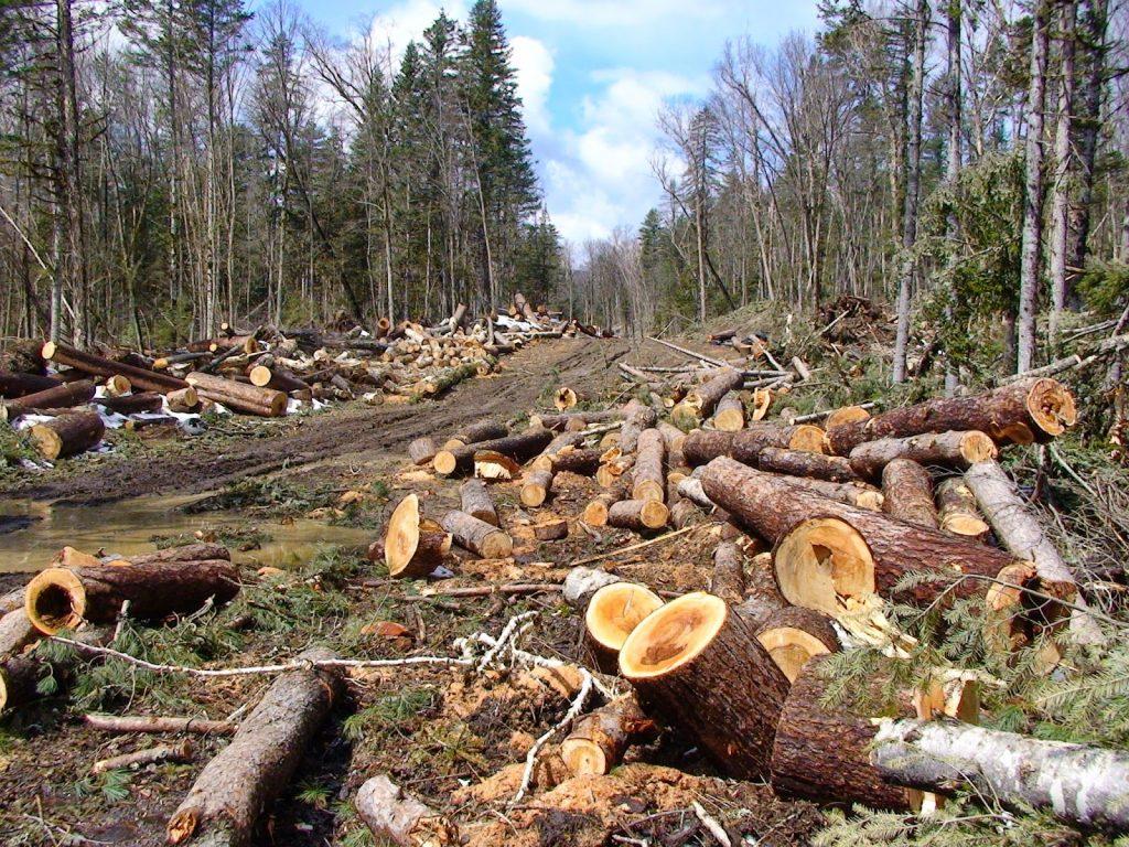 Ilustrasi Kerusakan Hutan di Indonesia