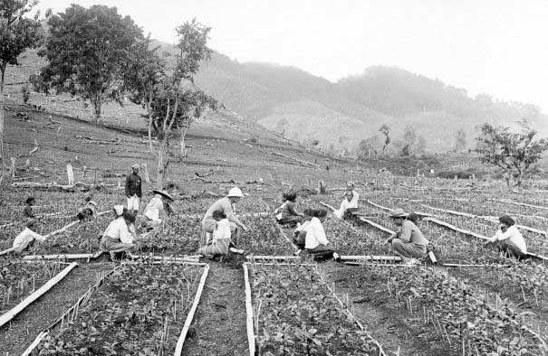 Gambar Petani Zaman Penjajahan
