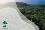 Dampak Perubahan Iklim bagi Hutan Indonesia di Masa Pandemi